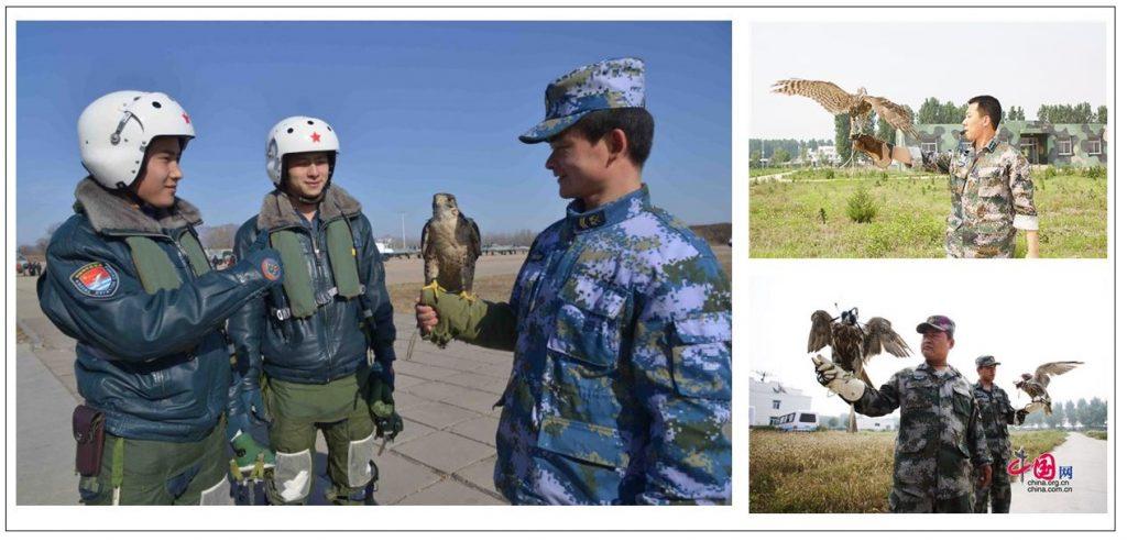 Les fauconniers de la PLAAF et de la PLANAF