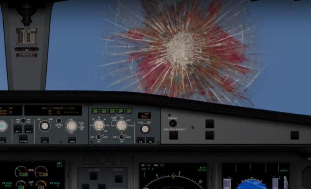 aircraft bird strike